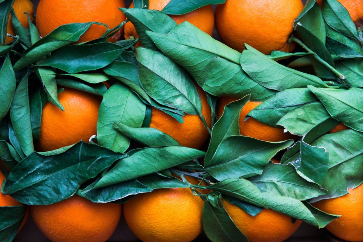 Meyve ve Sebze Değerlendirme Yolları
