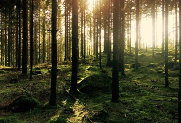Jotun YeşilAdımlar: Doğa ile İlişkimizi Güçlendiren Oyun