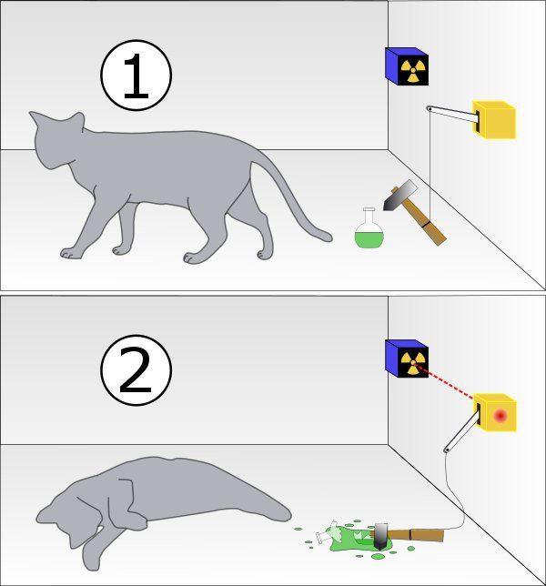 Kedi aynı zamanda hem canlı hem ölü olabilir mi?