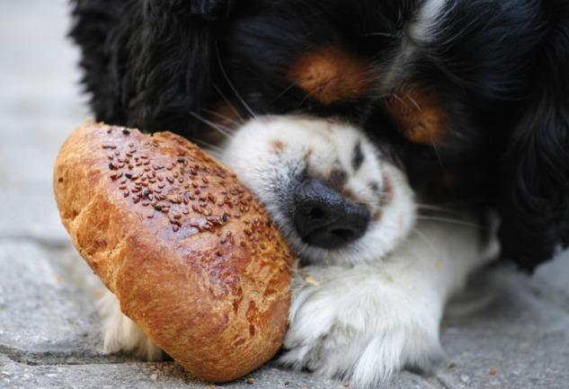 Ekmek İsrafını Önlemenin Yolları: Değerlendirin, Dönüştürün!