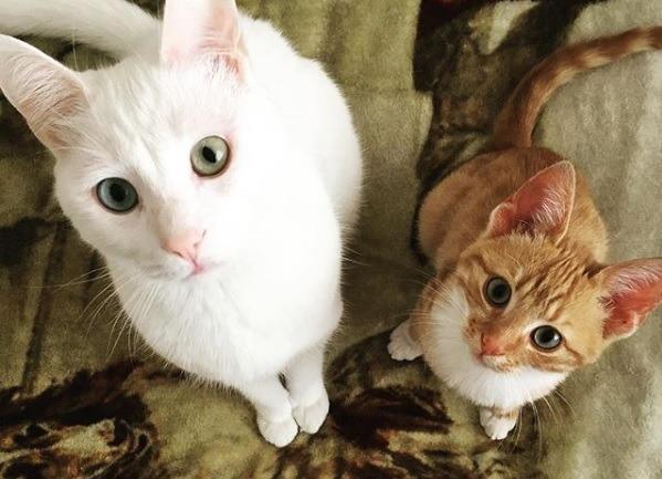Kedilerde Epilepsi: Onlar da Tıpkı Bizler Gibi