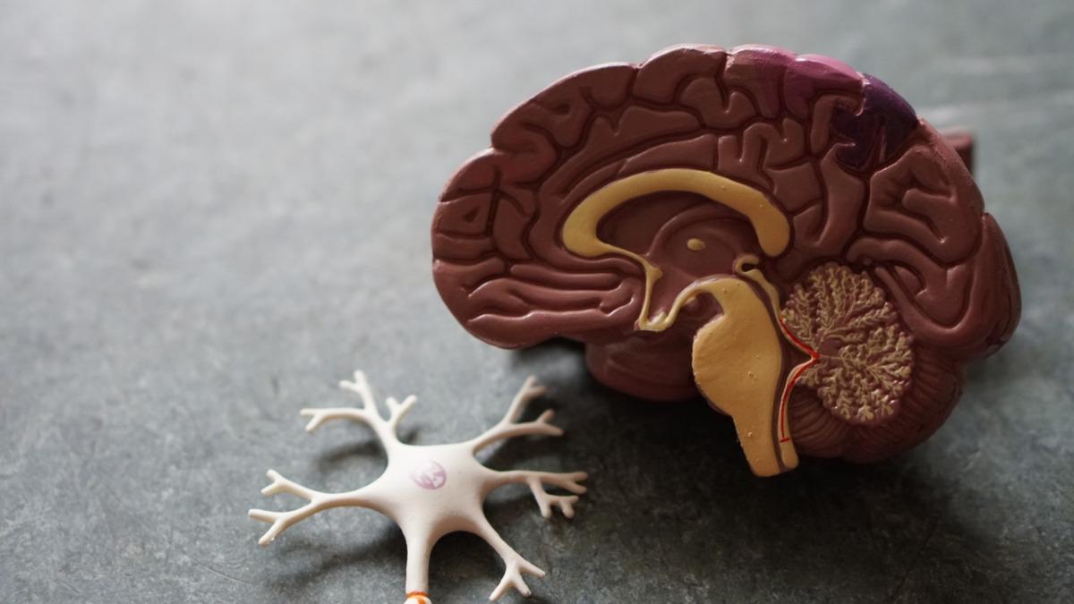 Beynimizin %100'ünü Kullanmak