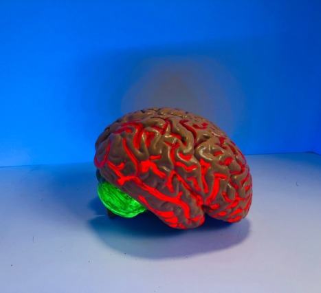 Kapta Üretilen Beyin: Beynin Çalışma Prensiplerinin Çözülmesi için Bir Adım