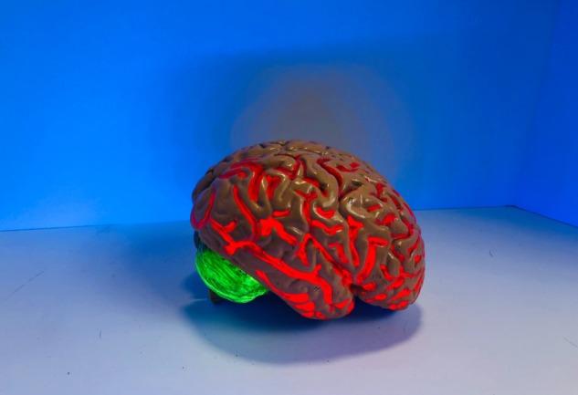 Beynimizin %10'unu mu Kullanıyoruz?: Efsane Bilime Karşı