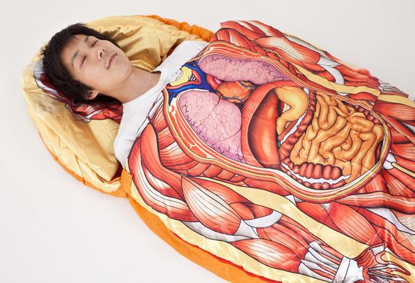 Abdominal Anatomi