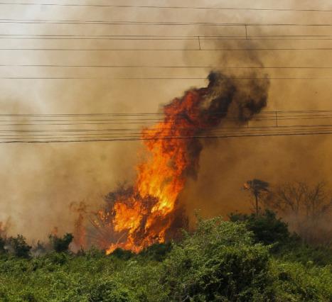 Brezilya Pantanal Yangınları: Dünyanın En Fazla Biyoçeşitliliğe Sahip Ekosistemi Tehlikede