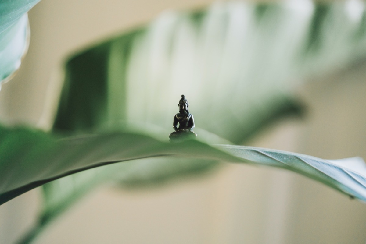Yoga Serüvenim