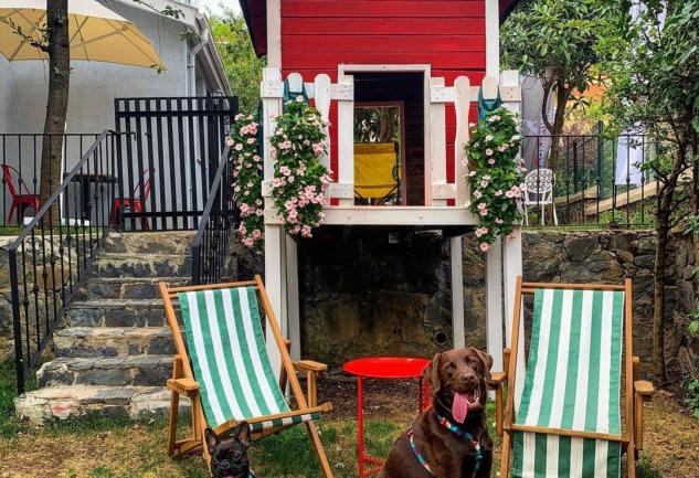 Roka Pups Cafe: Zekeriyaköy'ün Hayvan Dostu Mekanı