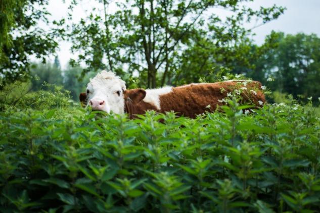 'Çiftlik Hayvanı'