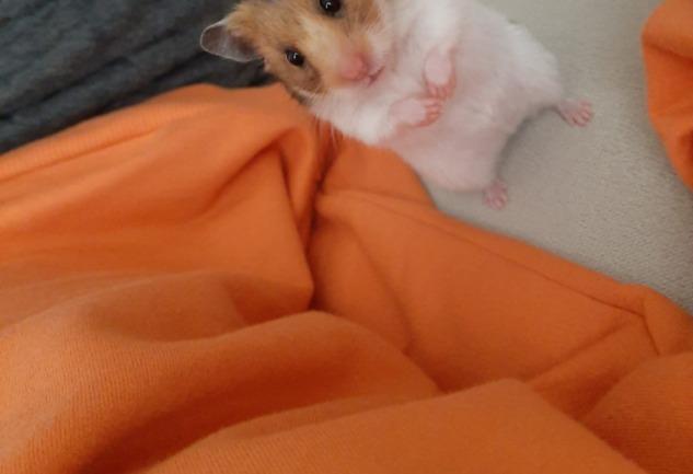 Hamster: Fare Önyargısından Uzak, Temiz ve Düzenli