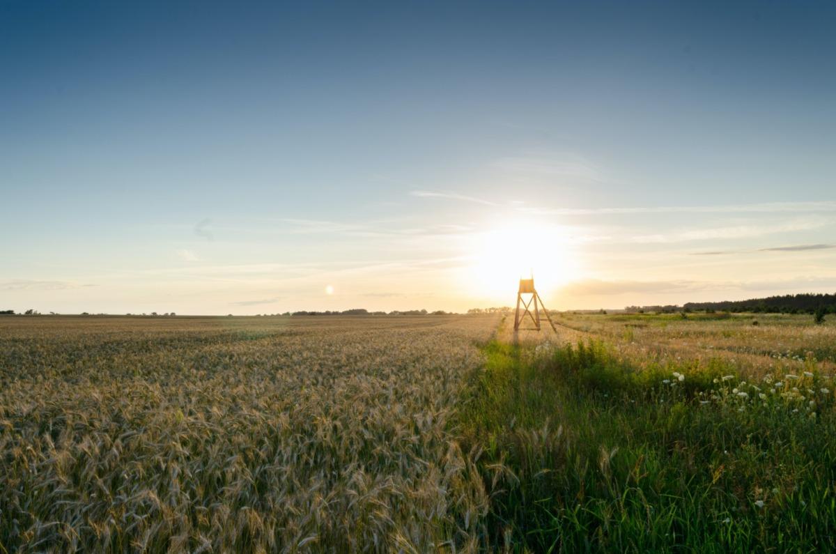 Sürdürülebilir Tarım