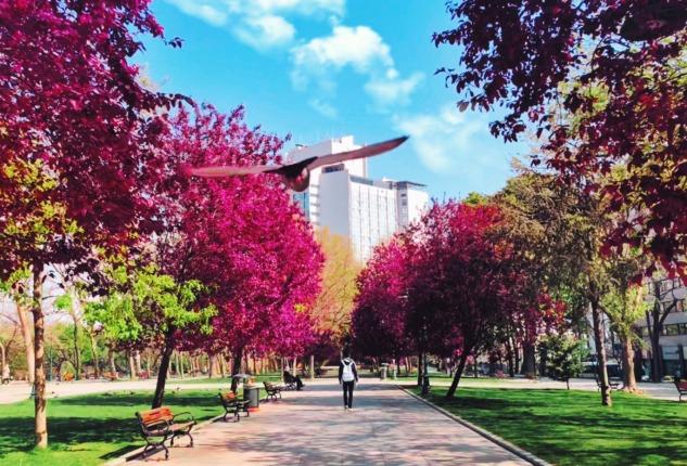 Fotoğraf Altyazısı | Katerina Kerdi (unsplash.com)