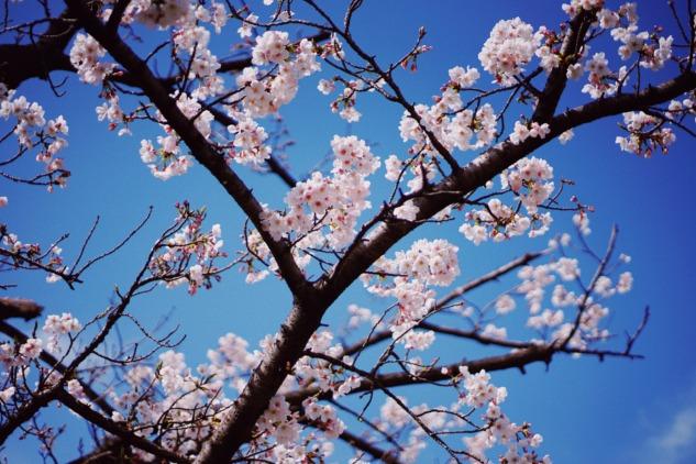 Fotoğraf Altyazısı | Jessica Alberto (unsplash.com)