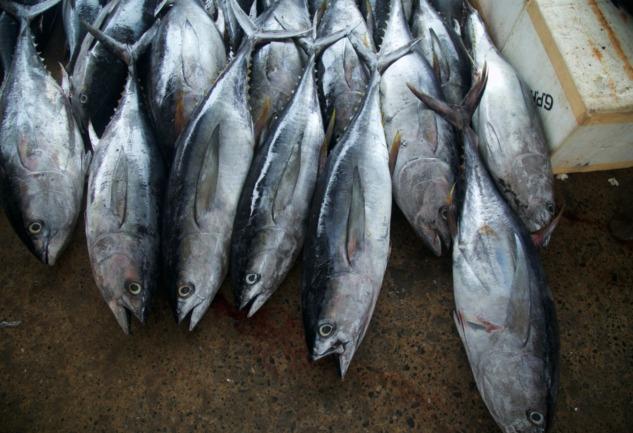 Seaspiracy: Akuakültürü Sorgulayan Belgesel