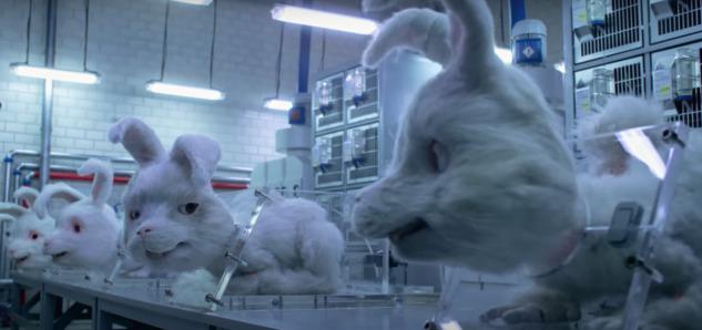 Denek tavşanlar