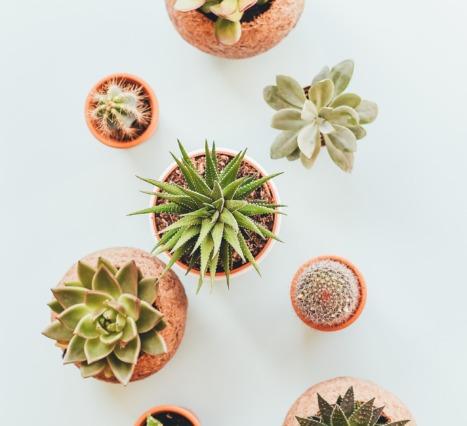 Plantfluencer: Yalnızca Bitkiler Üzerine Çalışan İçerik Üreticileri