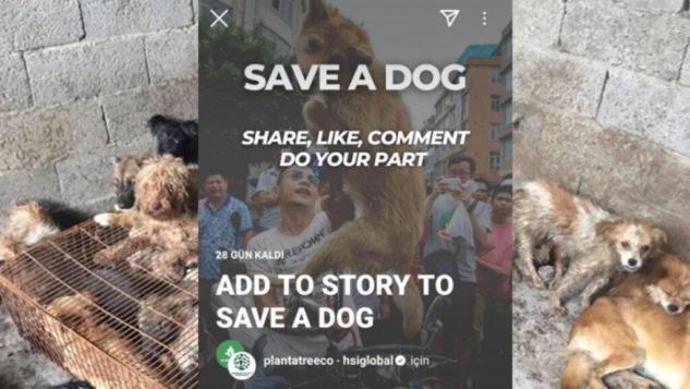 save-a-dog-kampanya-gorseli