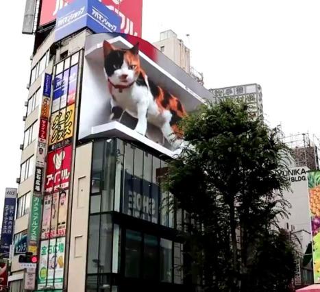 Hipergerçekçi Kedi: Shinjuku İstasyonu'ndan Geçenleri Selamlıyor