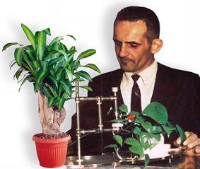 Backster Etkisi: Bitkiler Acıyı Hisseder ve Kaydeder